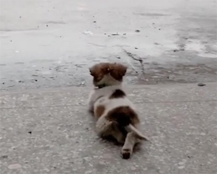 pioggia-cucciolo