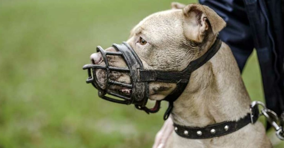cane con la museruola