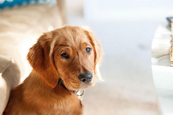 Punti di pressione del cane: quali sono e a cosa servono