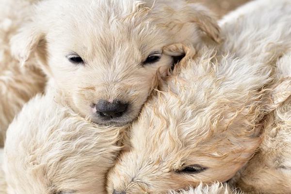 La protezione dei propri cuccioli