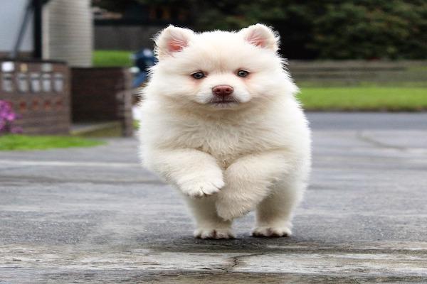Come mai i cani corrono più velocemente degli umani?