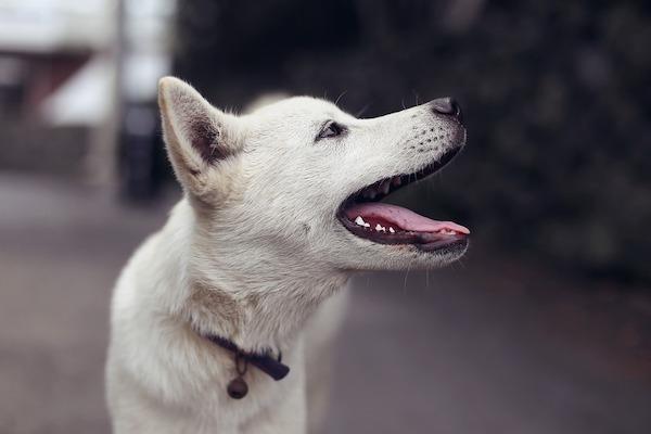 Insegnare al cane a contare, step by step