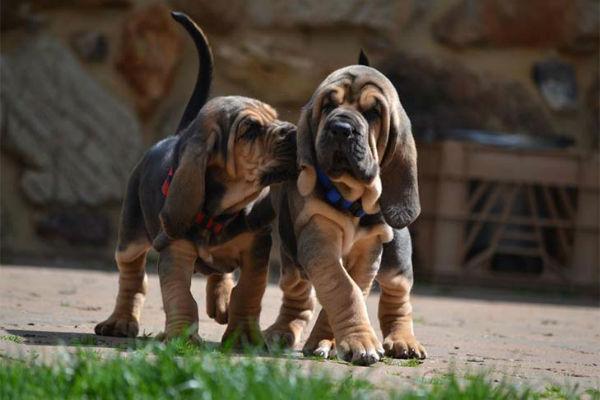 cani piccoli