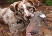 Punire il cane: è giusto? Risolve i problemi?
