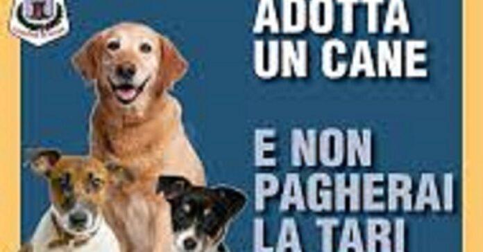 rose-adottare-un-cane-porta-fino-ad-un-risparmio-di-250-euro-sulle-tasse
