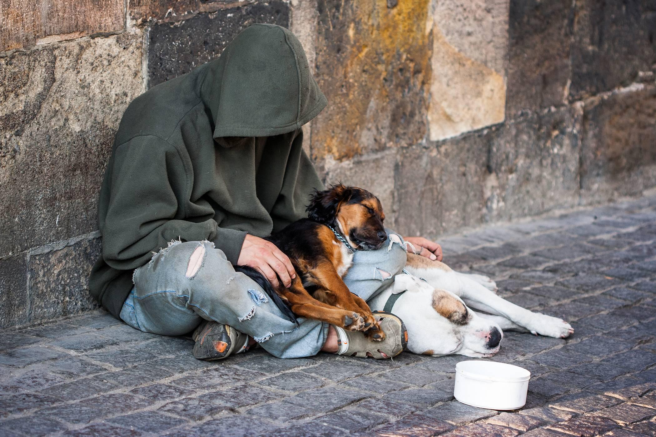 Milano, i cani dei senzatetto e i loro proprietari sapranno dove vivere