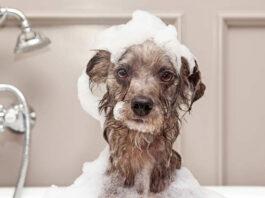 come fare shampoo per cani