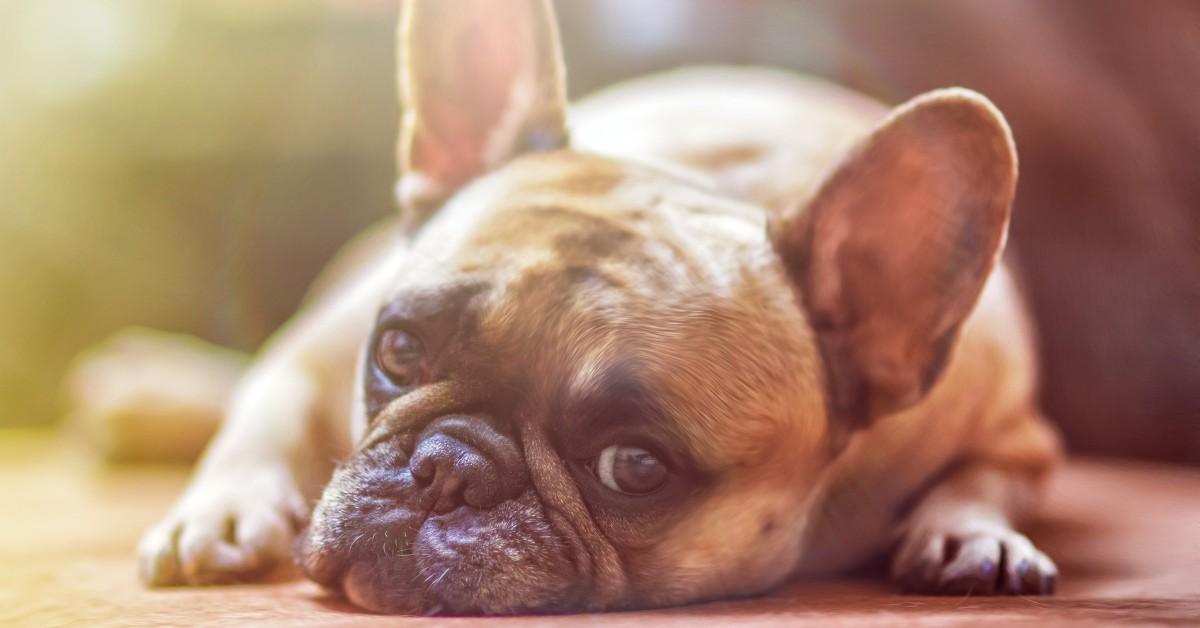 cane può sentirsi tradito