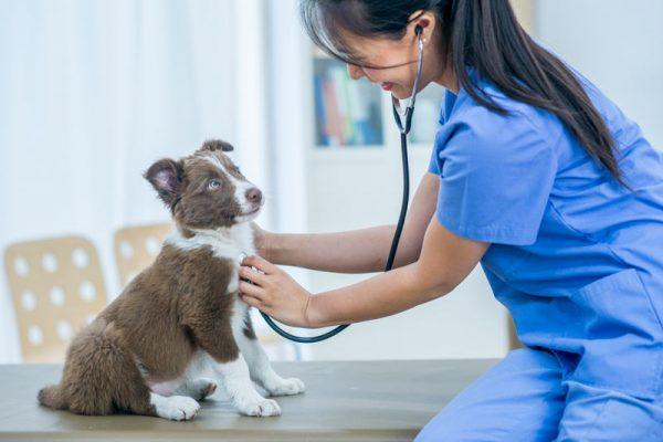 cane in ambulatorio