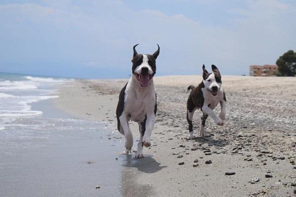cani che corrono sulla battigia