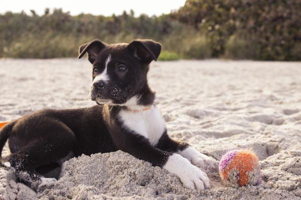 cucciolo di cane con palla