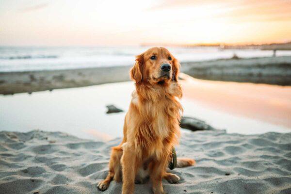 Spiagge libere per cani in Calabria: una piccola guida