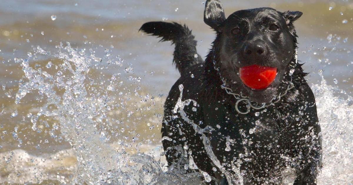 cane corre con la pallina in bocca
