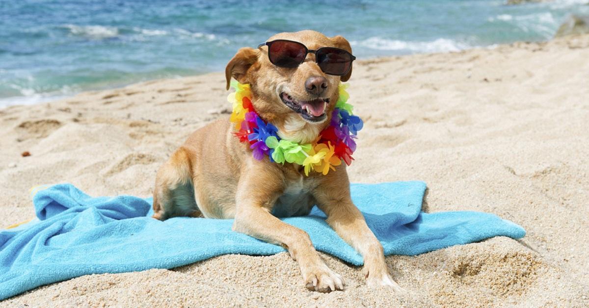 cane su telo da mare con occhiali da sole