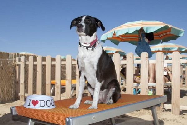 cane in stabilimento balneare