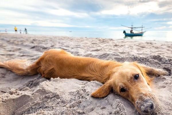 cane gioca sulla sabbia