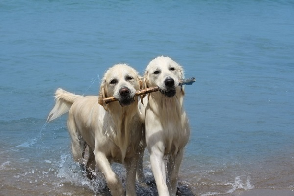 cani con bastone in bocca