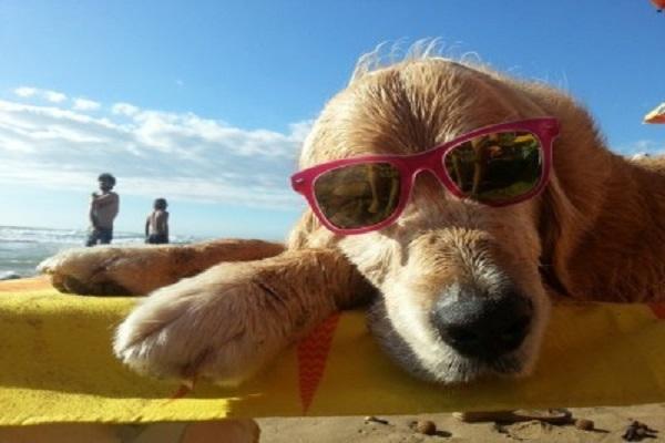 cane su lettino da mare