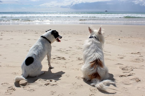 cani seduti in spiaggia