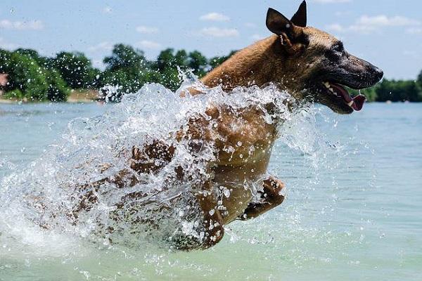 cane si tuffa in acqua