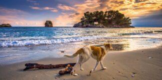 cane in spiaggia al tramonto