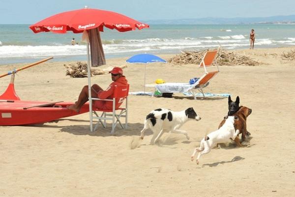 spiaggia per cani con bambino