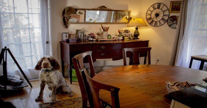 Il cane si arrampica sui mobili? Ecco quali sono le ragioni