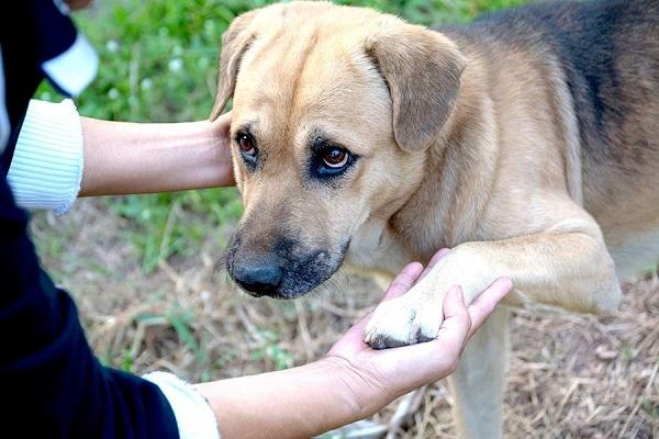cane che dà la zampa