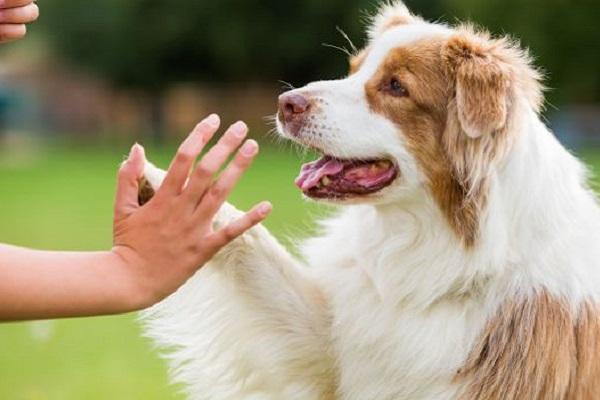 cane fa batti cinque