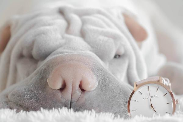 Non disturbare il cane quando dorme