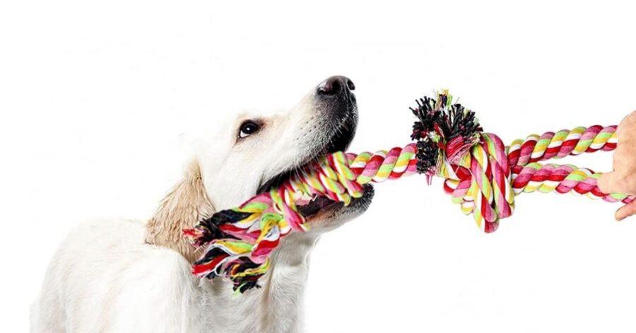 corda con manico cani