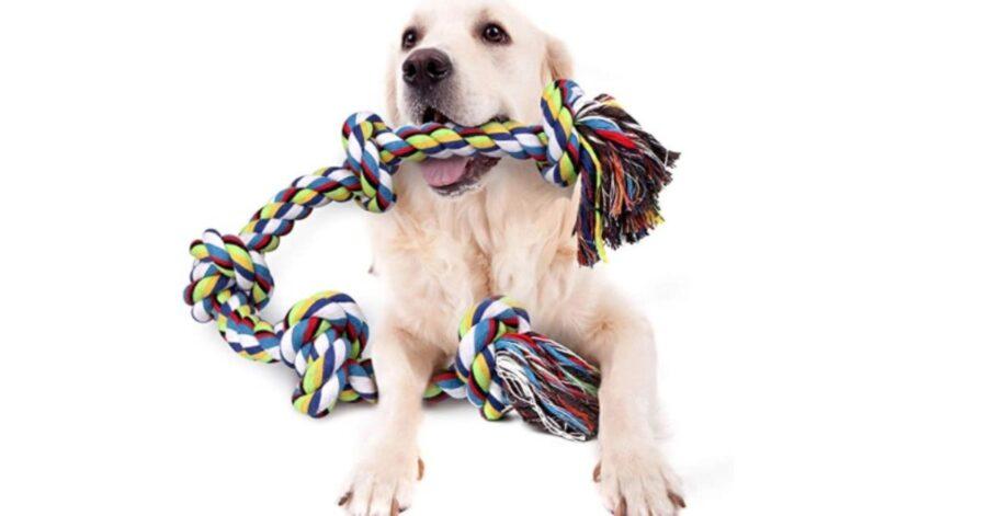 corda per cani tiro alla fune