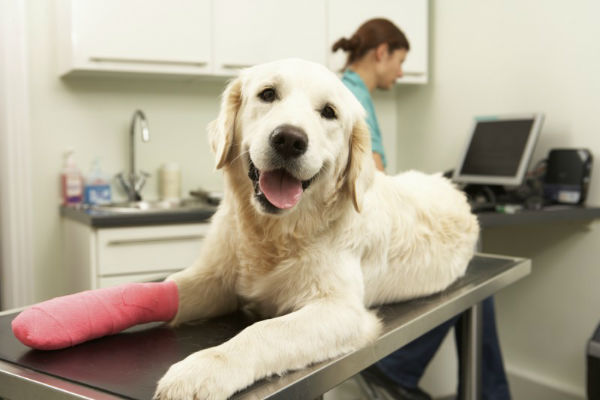 Togliere una spina al cane: come procedere e cosa fare dopo