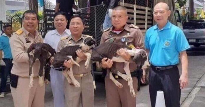 un-re-adotta-15-cani-dopo-esser-stati-lasciati-in-condizioni-disumane