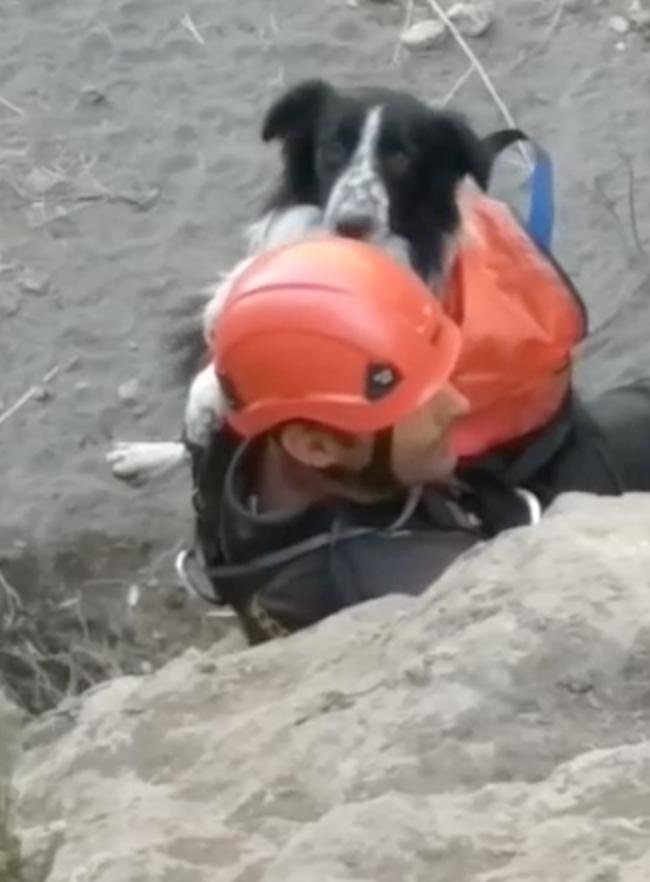 Vulcano, cane salvato