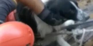 Cane salvato a Vulcano