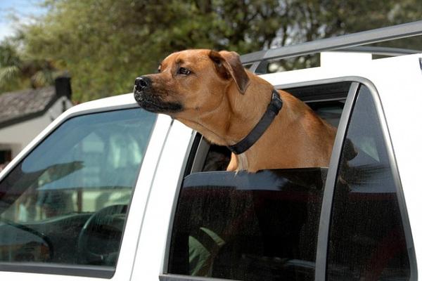 Accessori per cani in campeggio: quali sono?