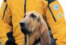 Bagoo cane da ricerca