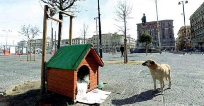 Cane Bella a Napoli