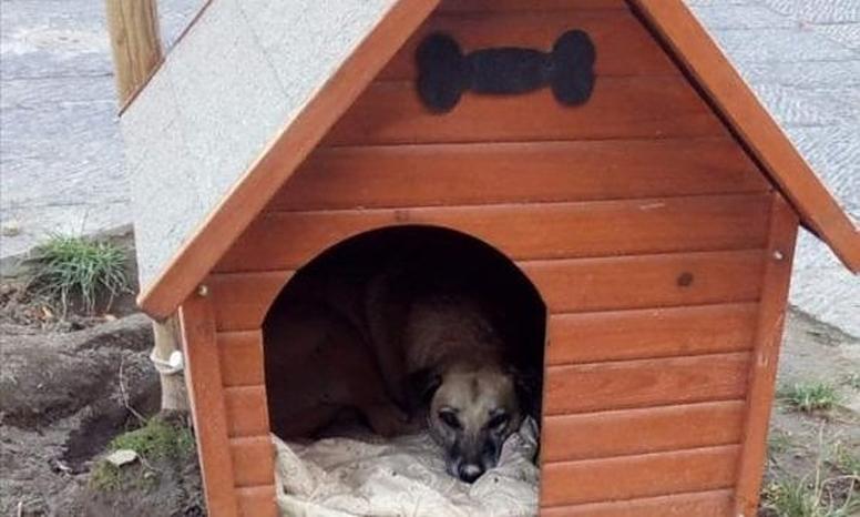 Napoli: Bella, il cane di quartiere che ama la libertà