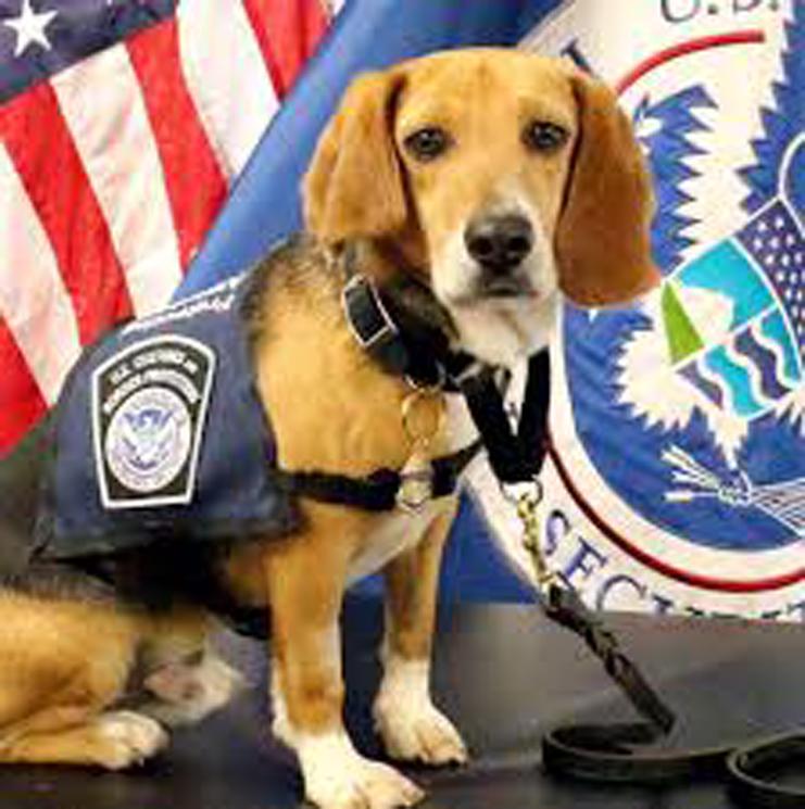 Murray, da cane maltrattato a K9 in aeroporto