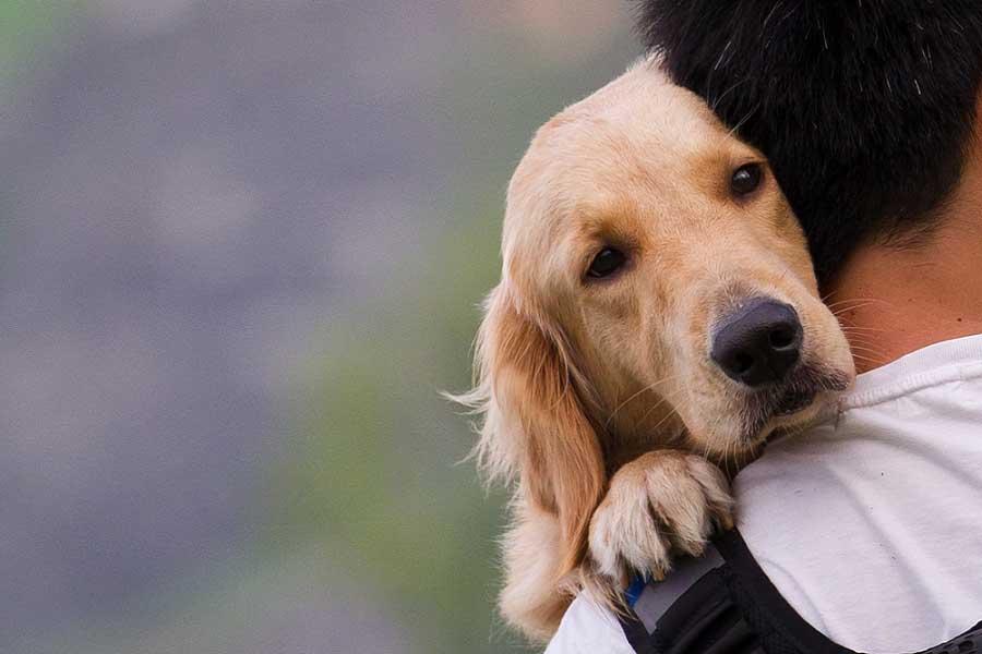 Cane abbracciato ad un uomo