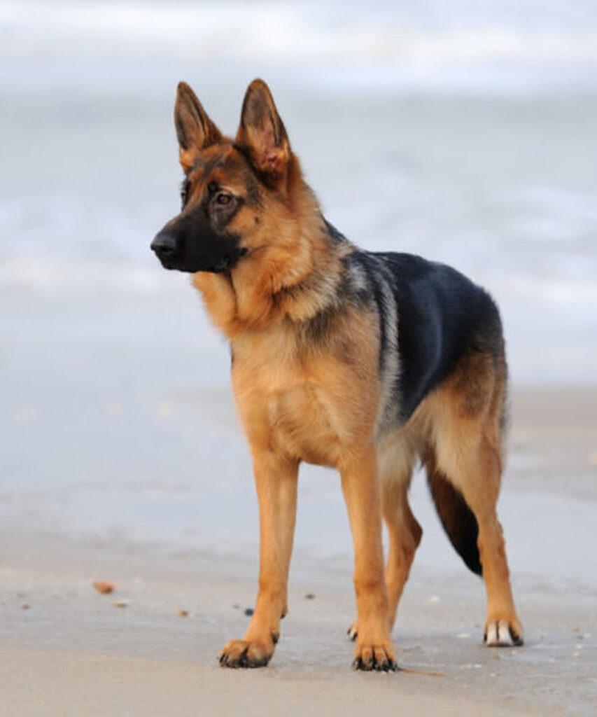 Lodi: cane perde la vita a colpi di forcone nel cortile di casa