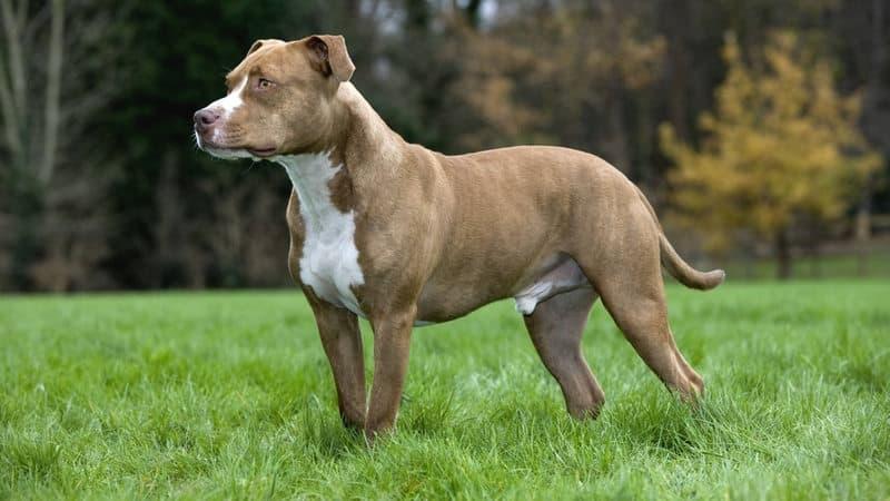 Zeus, il cane che ha perso la vita per salvare i suoi padroncini