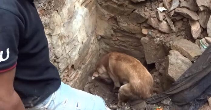 Cane che scava tra le macerie per cercare i suoi cuccioli