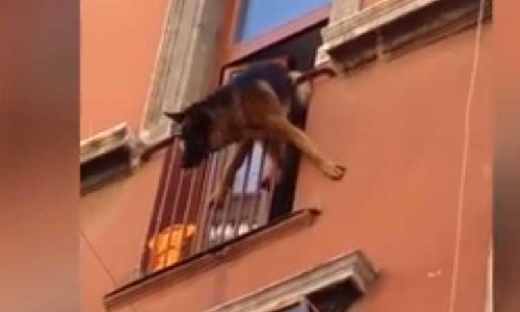 Roma, cane precipita dalla terrazza: l'intervento dei passanti è vitale