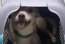 Cane in un trasportino