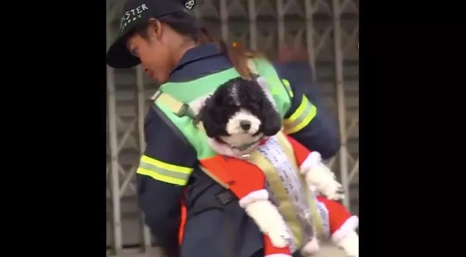 Cane insieme ad una netturbina