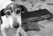 Cane randagio con sguardo dolce