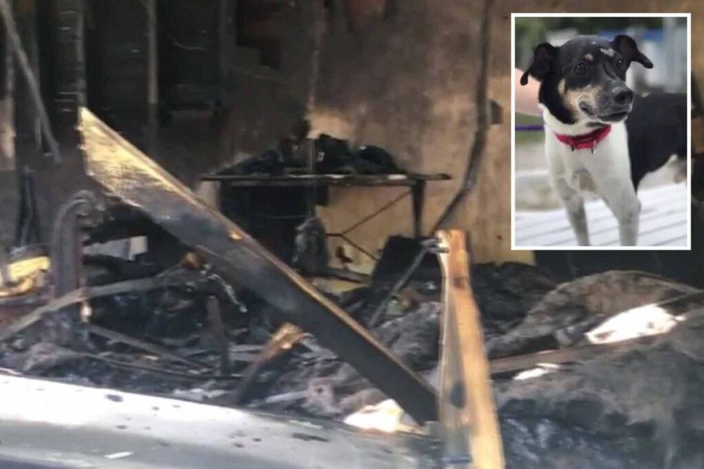 Zippy, il cane che ha perso la vita per salvare la sua famiglia da un incendio